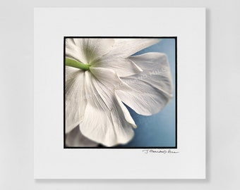 """Up close and personal: a delicate, papery white anemone flower's backside as a 3x3"""" photographic print in a 5x5"""" mat, frames available"""