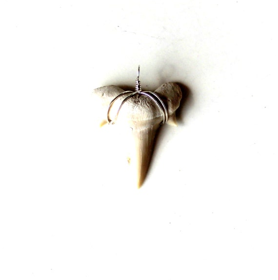 shark tooth. sterling wire wrapped pendant. tribal mens gift