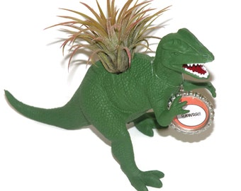 Fun birthday gift. Dinosaur planter including air plant.