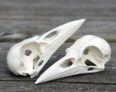 resin crow skull replica