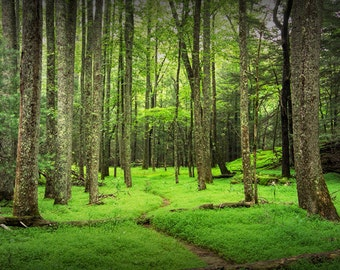 A Woodland Forest Trail Path Panorama in Cade's Cove in The Great Smoky Mountains in Tennessee No.478 Appalachia Color Landscape Photography