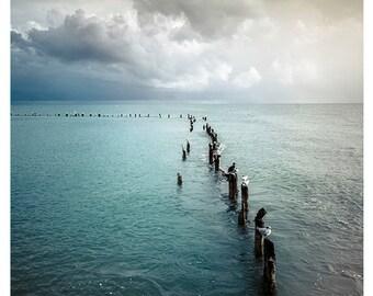 Fine art photography print, Coastal, Cottage, Home decor, Wall art, Ocean, Birds, Sea