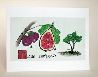 Ficus carica greeting card.