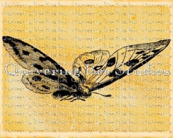 Butterfly Digital Graphic Download-fabric transfers scrapbooking decoupage mixed media pillows jewelry crafts no 0006