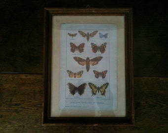 Vintage French wooden framed butterfly study circa 1960's / English Shop