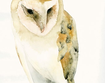 Barn Owl Fine Art Print from Original Watercolor