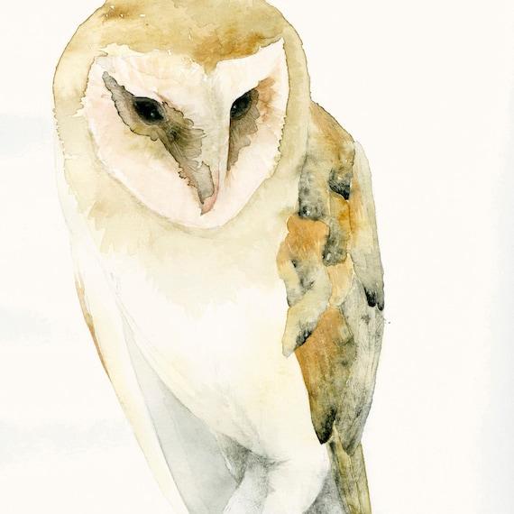 Barn Owl Fine Art Print from Original Watercolor