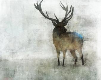 Reindeer 02: Giclee Fine Art Print 13X19