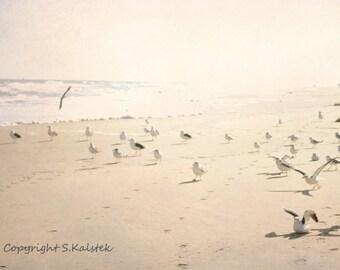 Beach Photography Seagulls Print Ocean Shore Pale Pink Beige Wall art Soft Light Ocean art 8x12