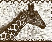 Giraffe Pirate King