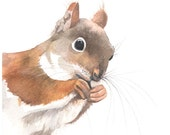 Squirrel painting -S043-  print of watercolor painting- 5 by 7 print- squirrel art - earth tones