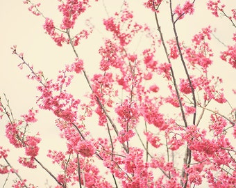 floral pink blossom tree fine art photo wall decor spring photography flowers cream background nursery art