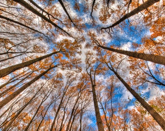 Sky Above the Woods, Autumn Landscape Photography, Fall Foliage, Orange, Woodland, Trees, HDR Photograph, Color, Art Print
