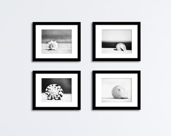 Seashell Black and White Photography Set - Four Sea Shell Photographs - grey beach prints, gray nautical photos, neutral coastal wall art