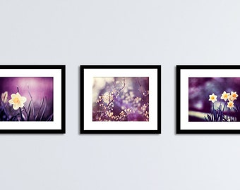 Purple Wall Art Set - dark plum yellow nature flower photography eggplant violet botanical print set modern colorful photographs 11x14, 8x10