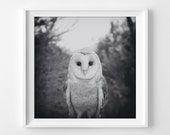 "Nature Owl Photograph Unframed / fairy tale black white grey gray woodland winter dark mysterious fall / photography print ""Secret Heart"""