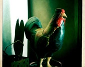 rooster auditions for barnyard musical