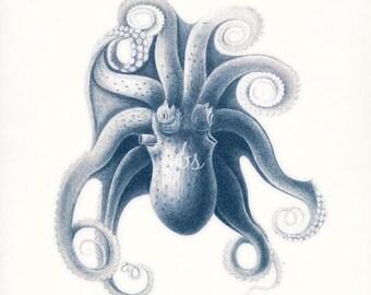 Vintage Octopus Coastal Art Natural History Print, 8x10 - 3 color choices