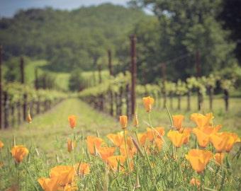 Napa Sonoma Vineyard Photography Orange Wild Poppy Flowers Home Decor California Wall Art Green Blue Art Print Winery Grapevines