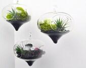 Set of three Diamond Terrariums - Air Plant - Hanging Glass - Green Gift - Home Decoration