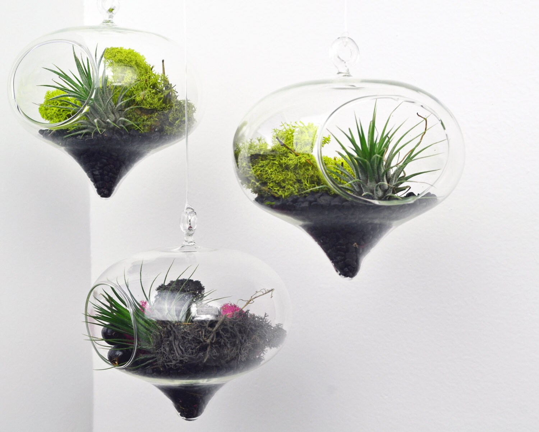 set of three diamond terrariums air plant hanging by pinkserissa. Black Bedroom Furniture Sets. Home Design Ideas