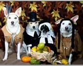 4 Dog Puppy Dogs Puppies Happy Thanksgiving Pilgrim Pilgrims Greeting Notecards/ Envelopes Set