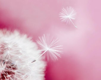 pink dandelion wall art nature photography 8x10 20x30 fine art photography dandelion pink photograph print pastel decor nursery spring decor