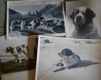 4 Old St Bernard Postcards