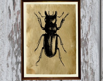 Natural history art insect print Old paper home decor AK181