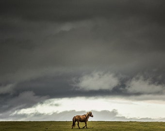 Brown horse photography, horse fine art photo print. Lone horse running away against stormy sky landscape. Mongolia horses travel photograph