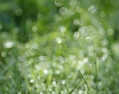 Abstract Soft Green Photograph - The Dew Sparkles Like Diamonds - print, dreamy green grass, sparkle, dorm decor,  , fpoe