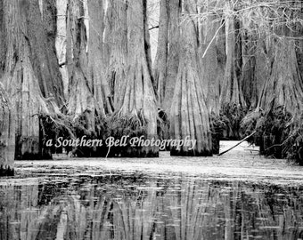 Black and White Bayou Photo Water Photography Moss 8x10 Trees Fall Trees Swamp Lake Photo Water Red Tree Louisiana Bayous Art Print 4