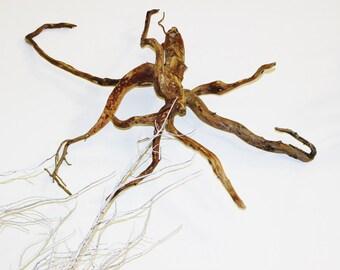 Driftwood Octopus Sculpture, Glass Eye, Handmade OOAK, 2ft. x 2ft. approx., Mixed Media