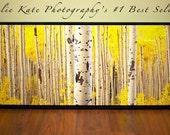 """Aspen Trees, 20"""" x 60"""" Print on Canvas, Photos of Aspens, Aspen Trees, Fall - """"Aspens Panoramic on Canvas """""""