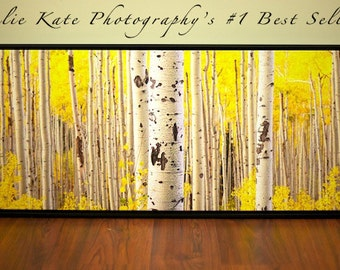 "20"" x 60"" Print on Canvas, Photos of Aspens, Aspen Trees, Fall - ""Aspens Panoramic on Canvas """