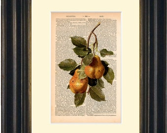 Fruit Print   Pears  Print on Upcycled 1890's French Dictionary Page  mixed media digital print art