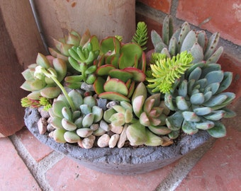 Oval Handcrafted Succulent Arrangement