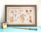 Herbology Reference- Hogwarts Magical Plants- Harry Potter Poster- Movie Poster- Botanical Chart- Geeky Home Decor