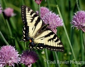 Eastern Tiger Swallowtail, Fine Art Photography, Nature Photography, Butterfly Photography
