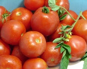 Early Stupice Tomato Seeds Heirloom Non GMO