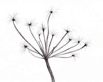 """Simple flower art print of an original drawing available 5x7"""" or 8x10"""""""
