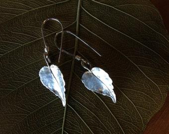 Black Walnut Sterling Silver Botanical Earrings