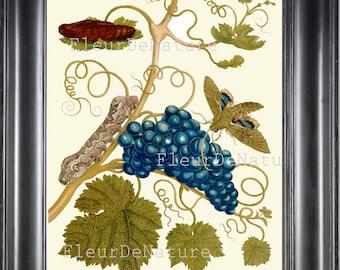 BOTANICAL PRINT Sibylla 8x10 Botanical Art Print 1 Beautiful Grape Vine Plant Branch Moth Butterfly Garden Nature to Frame Home Decor