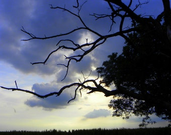 Sunset at Shelby Farms, Nature Photograph, Fine Art Photograph, Color Photograph