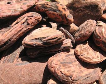 Driftwood Bark