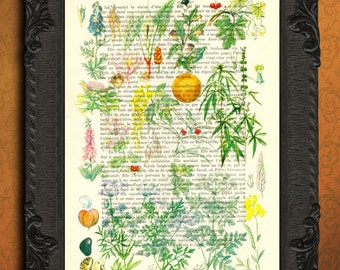 Botanical chart print poison plants print herbs illustration