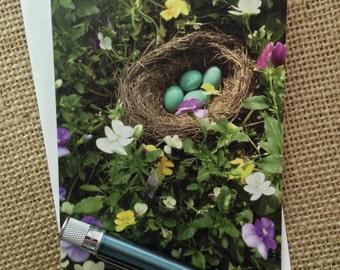 Robin's Nest: Blank Note Card