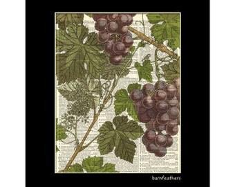 Vintage Grape Illustration - Dictionary Art Print - Book Page Art - Home Decor Print No. P226
