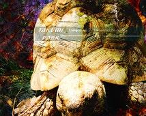 Turtle Artwork, Photo Print, Modern Art Print, Home Decor, Animal Art, Sea Animal Decor, Unique Art Print, Reptile Decor, Turtle Picture