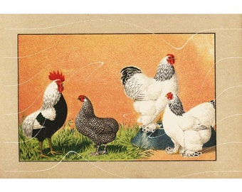 Antique Print Chicken Hen Poultry Chromolithograph original Print